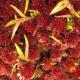 Rašeliník Jihoamerický - Královský substrát
